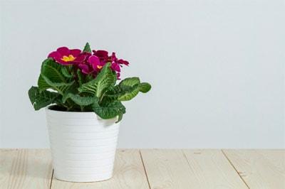 Загадки про цветок для квеста